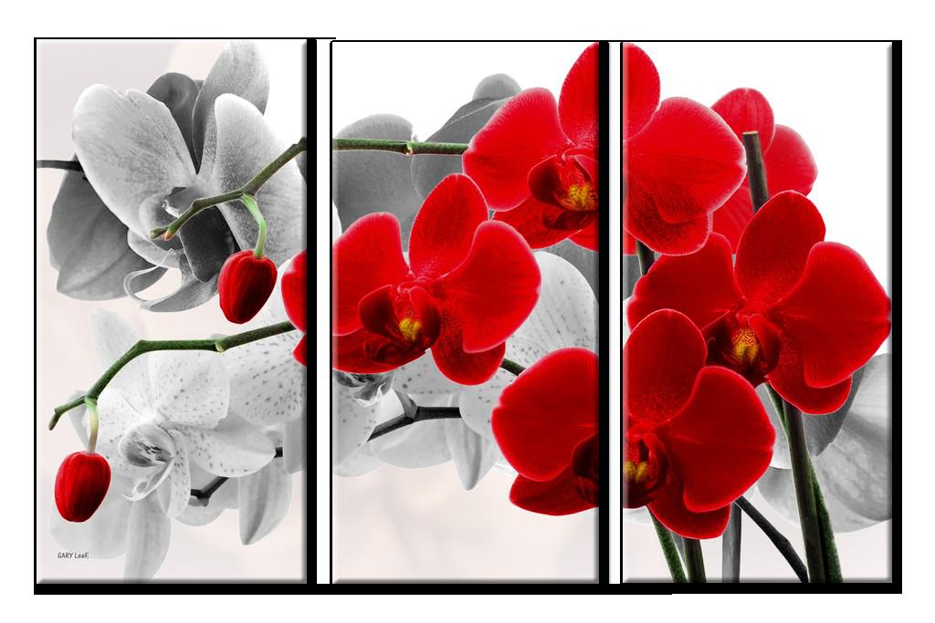оптики, картинки для модульных картин высокого разрешения ангел подробно рассказывает